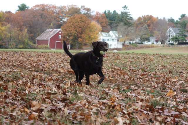 Lucy running w: ball
