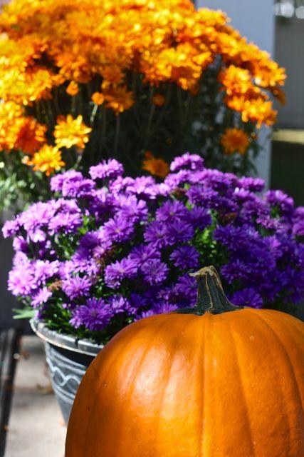 pumpkin & mums