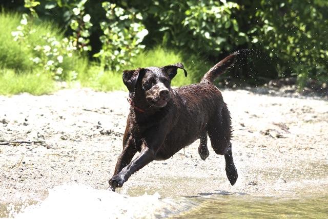 lucy running